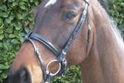 """PreCara """"Classic"""" Pony schwarz/gold"""